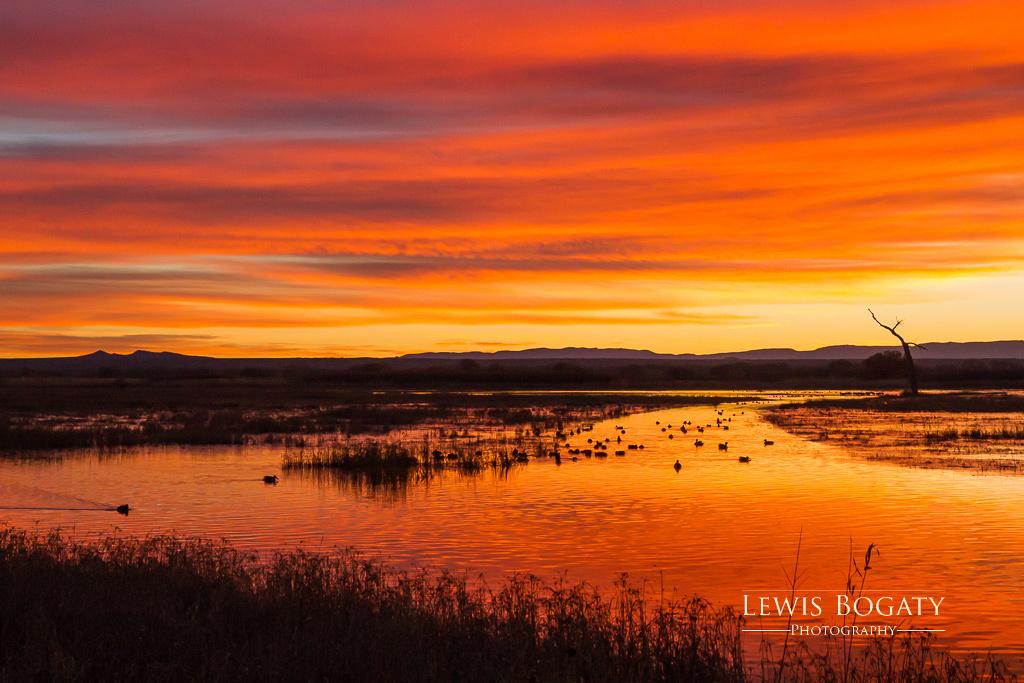 Sunrise At Bosque