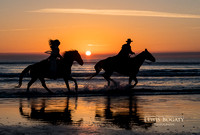 Horses On The Beach, St. Augustine