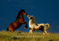 Wild Horses,  McCullough Peaks WY
